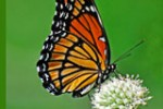 sharing-stories-and-butterfly_thumb